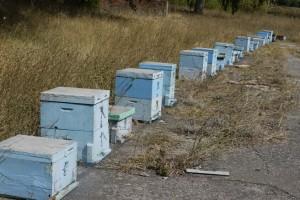 Les ruches aux couleurs grecques