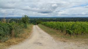 Des petits raidillons dans les vignes